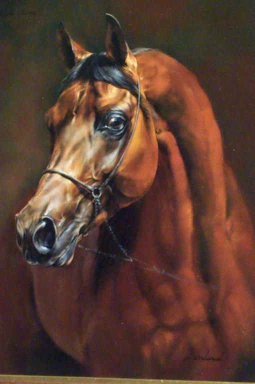 Abdullah-arabian horse